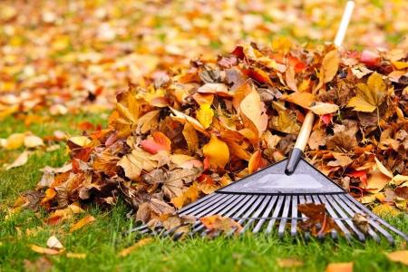 Wir reinigen ihr Grundstück   zuverlässig von Laub und entsorgen es auch fachgerecht.